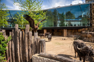 Studio Farris Architects - Antwerp Zoo - PH_005 AVIARY - photo Jonas Verhulst_LR 1440px