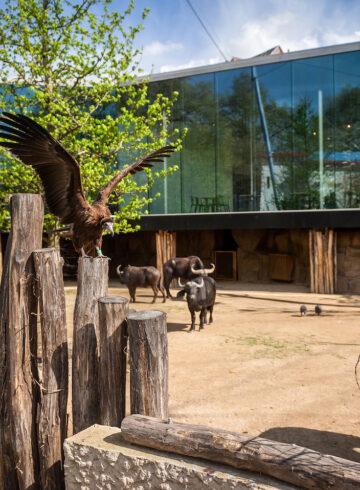 Studio Farris Architects - Antwerp Zoo - PH_005 AVIARY - photo Jonas Verhulst_LR 1440px